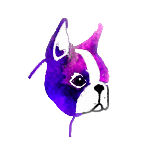 Arco Iris Boston Terrier Logo